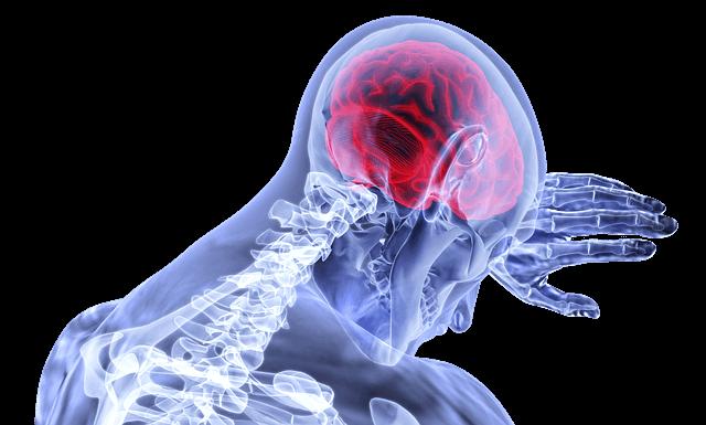 טיפול בהתקפי חרדה קשים, מוח האדם