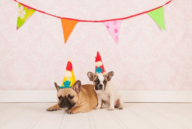 כלבים, כובע ליצן, מסיבה