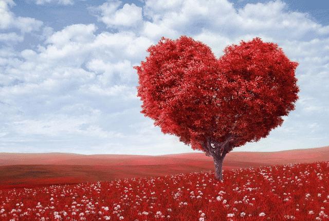 עץ אהבה אדום