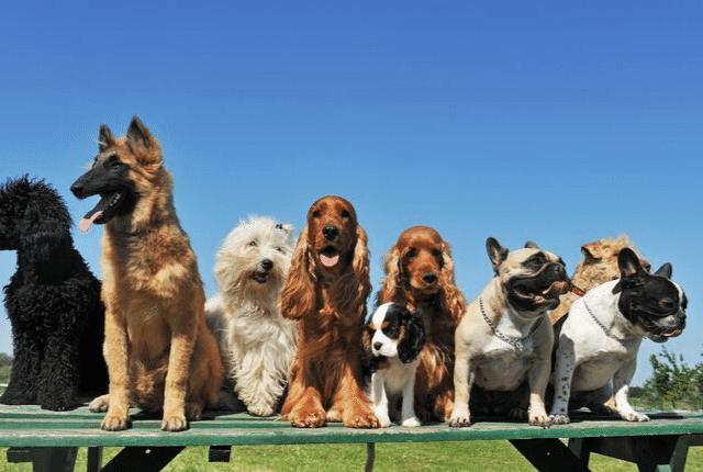 כלבים יפים